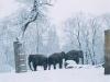 Elefanten im Zoo, Zoologischer Garten, im Hintergrund Gedächniskirche, Januar 2005, Berlin, Deutschland#