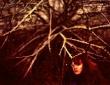in-focus-2008_egle-jociute_augimo-linija